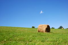 After harvest. Landscape of the green field after harvest Stock Photography