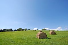 After harvest. Landscape of the green field after harvest Royalty Free Stock Photography