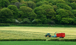 Harvest. Tractor in the field. Trees in the background Royalty Free Stock Photography