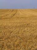 Harvest. Newly harvested wheat field in jutland, denmark Stock Image