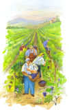 Harvest. This is harvest vine. This is water-colour stock illustration