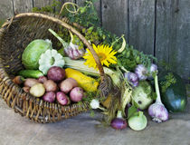 Harvest. The village still life. Harvest Royalty Free Stock Photo