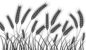 Harvest. Silhouette of wheat ears ready for harvest Stock Image