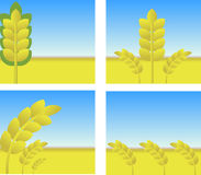 Harvest. Vector illustration - harvest for you desing Royalty Free Stock Photography