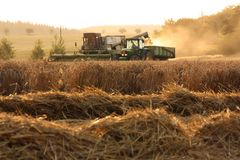 Harvest. Combine and tractor with the trailer, field of corn Stock Photo