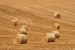 Harvest abstract. Successful harvesting finishes difficult year of a very hard work. Farmers are happiest people all over the world Royalty Free Stock Photos