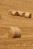 Harvest abstract. Successful harvesting finishes difficult year of a very hard work. Farmers are happiest people all over the world Royalty Free Stock Images