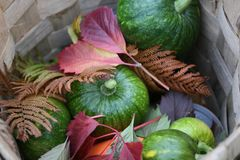 Harvest of an agricultural farm of a country house Royalty Free Stock Images