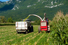Harvest - Agricultural machinery harvests corn. On a field Stock Photo
