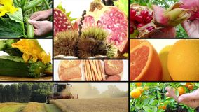 Harvest and agricultural products stock video footage