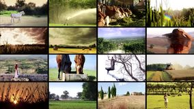 Harvest and agricultural products stock video