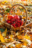 Harvest apple, cranberry, mushrooms in a basket Royalty Free Stock Images