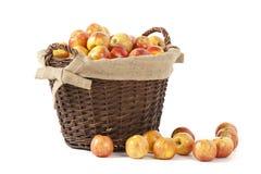 Harvest of Apples. A basket full of fresh apples on white background Stock Image