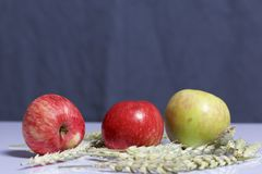 Harvest of apples. Apples on a gray background. Nearby lie the ears of cereals. Harvest of apples. Apples on a gray background. Nearby lie the ears of cereals royalty free stock photo