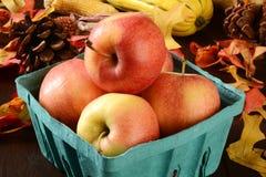 Harvest apples Royalty Free Stock Photo