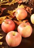 Harvest apples Stock Photo