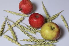 Harvest of apples. Apples on a white background. Nearby lie the ears of cereals. Harvest of apples. Apples on a white background. Nearby lie the ears of cereals stock photos
