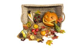 Harvest in autumn with natural vegetables and halloween pumpkin. Inside and outside a basket there are a carved helloween pumpkin, fruits like apples, corn, nuts Stock Images