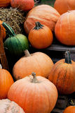 Harvest of autumn pumpkins Royalty Free Stock Photos