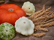 Harvest of autumn vegetables pumpkin, apples, corns, patisson, zucchini, wheat spikelets. natural eco food concept. royalty free stock photo