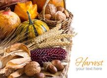 Harvest background Royalty Free Stock Image