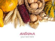 Harvest background Stock Image