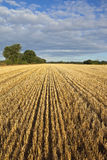 Harvest background Stock Image