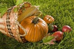 Harvest Basket Stock Images