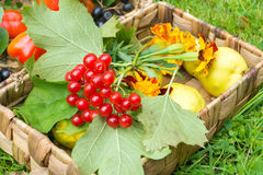 Harvest in a basket Stock Images