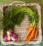 Harvest Basket Stock Photos