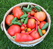 Harvest Basket of Tomatoes and Peppers Stock Photography