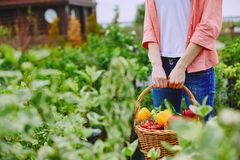 Harvest in basket Stock Images