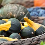 Ripe pumpkins in a basket. A harvest of beautiful mature pumpkins folded, laid in a basket royalty free stock images