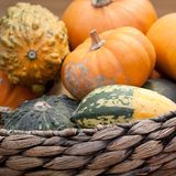 Ripe pumpkins in a basket. A harvest of beautiful mature pumpkins folded, laid in a basket stock images