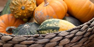 Ripe pumpkins in a basket. A harvest of beautiful mature pumpkins folded, laid in a basket stock photos
