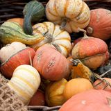Unusua pumpkins in a basket. A harvest of beautiful unusua pumpkins folded, laid in a basket royalty free stock images