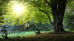 Harvest bench. Lonely bench in the harvest with tree and foliage Royalty Free Stock Photo