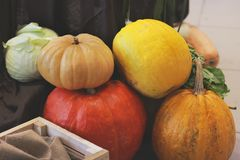 Harvest. Big pumpkins royalty free stock images