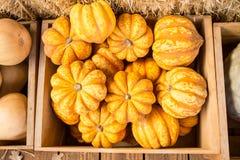 Harvest Bounty Royalty Free Stock Photos
