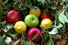 Harvest or bunch of fruit closeup. Harvest or bunch of fruit close up Royalty Free Stock Photos