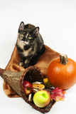 Harvest Cat and Horn of Plenty. Tortoiseshell cat is wearing her autumn colors and fits right in with the horn of plenty and the colors of harvest time royalty free stock photo