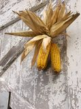 Harvest Celebration. Dried corn bundle placed on barn door for harvest celebration stock images