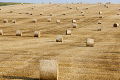 Harvest of cereals Stock Photo