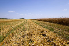 harvest of cereals Stock Photography