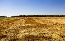 Harvest cereals Stock Photo