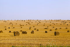harvest of cereals Stock Image