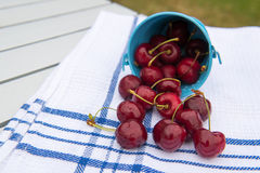 Harvest of cherries Royalty Free Stock Images