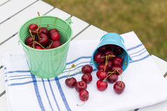 Harvest of cherries Royalty Free Stock Image