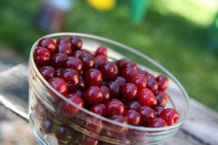 Harvest of cherries stock image