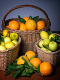 Harvest of citrus Royalty Free Stock Image